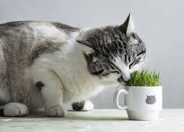 You can tell when cats ingest just a little of this plant by the following signs: Some Plants Can Make Your Cat Sick