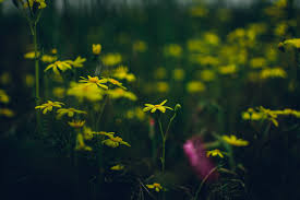 Flowers Bokeh Yellow Green Pink Colorful Dark 6000
