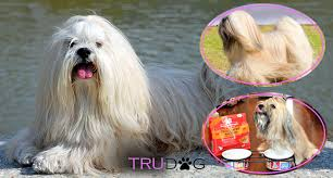 Lhasa Apso Diet Chart Ultimate Guide To Caring For My Lhasa Apso Trudog