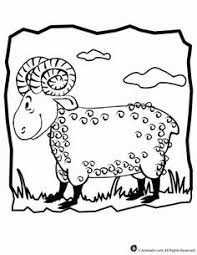 35a10817228fa2e8b79fd3e504f4765d animal coloring pages coloring sheets abraham image for star activity abram's promise pinterest on aquila and priscilla coloring page