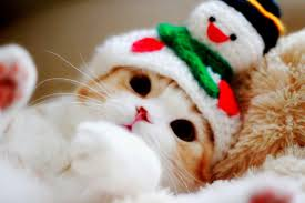 cats images cat hd wallpaper and background photos