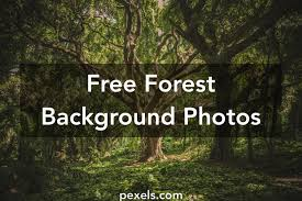 1000 Interesting Forest Background Photos Pexels Free