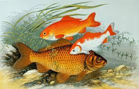 Pesci in acquario: come allevarli correttamente acquario dacqua