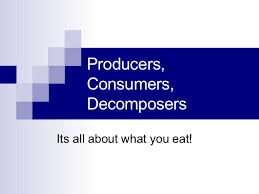 Producers And Consumers Venn Diagram Producers Consumers And Decomposers