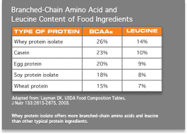Protein Absorption Chart Ampk Clinically Swoll
