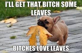 Dog Meme | Memes | Pinterest | Dog Memes, Leaves and Smiley Faces via Relatably.com