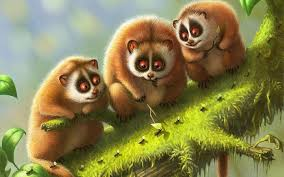 Cute Nature Animals Wallpapers HD 254 ...