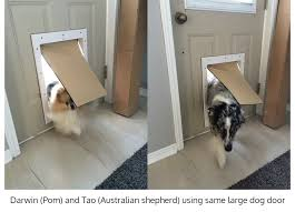 pomeranian and australian shepherd using freedom pet pass energy efficient insulated large dog door