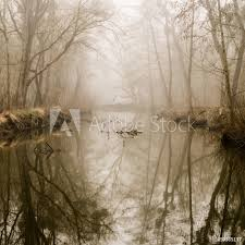 Fotobehang Misty Swamp Foto4art