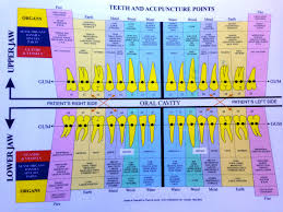 62 Actual Holistic Tooth Chart