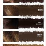 Best Hair Color Feria Shades Collection Of Hair Color Trends