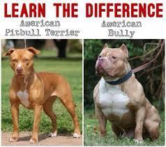 pitbull dog vs bulldog.  Dog Image Result For American Bulldog Vs Pitbull American Bullies  Pitbull Dog Hacks Inside Pitbull Vs Bulldog N