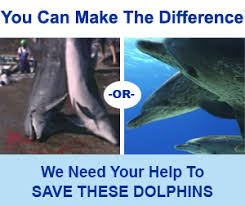 Image result for Help a dolphin or whale in trouble pics