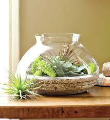 terrarium design planters plants modern containers glass amusing terrariums for large plant moder