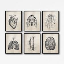 neutral office decor. set of six art prints science anatomy wall neutral tan brown vintage style medical student gift doctoru0027s office decor h