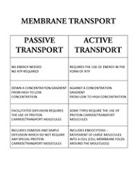 Active _ Passive Transport Comparison Chart Biology
