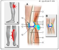 schmerzen im bein und knie