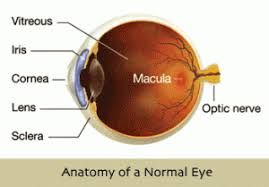 age can cause a wide variety of problems in the central part of the retina which is called the macula years ago all of these problems were lumped into one