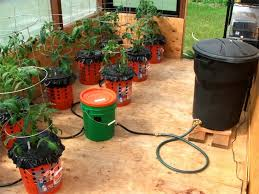alaska gardens nursing home. wasilla alaska garden adventures: grow bucket update tomatoes in self watering buckets gardens nursing home