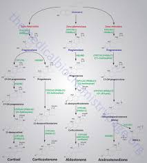 Hormones And Their Functions Chart Adrenal Steroid Hormone Synthesis Large Image