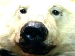 polar bear rug closed mouth with black felt by fake skin head real white