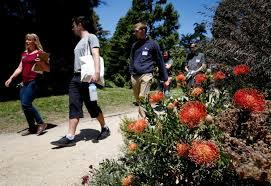 sf botanical garden digs its volunteers who get hands dirty