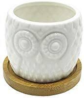 Cute Cartoon Animal Owl Shaped Ceramic Cactus ... - Amazon.com