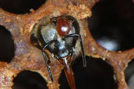 Vanquish The Varroa Mite With Vapour