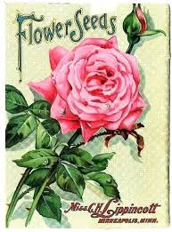 garden seed cataloge garden seed garden catalogs by mail vintage seed catalog with pink roses free
