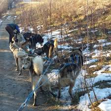 photo of just short of magic sled dog tours fairbanks ak united states