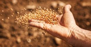 Parable of the Sower Meaning and Amazing Lessons