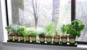 window sill herb garden kits review 2021