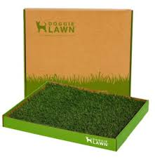 dogs bathroom grass. doggielawn disposable dog potty is an excellent indoor solution for several reasons. first, those who would prefer not to clean a potty, dogs bathroom grass