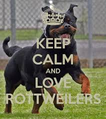 Image result for rottweilers
