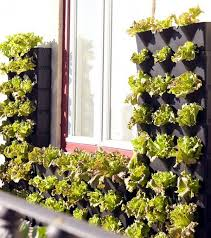 Small Picture 81 best Vertical gardens images on Pinterest Vertical gardens