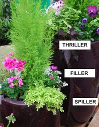 Full Sun Container Garden Plants Ideas  Home InspirationsContainer Garden Ideas Full Sun