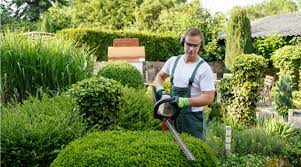 hiring a gardener how much to pay