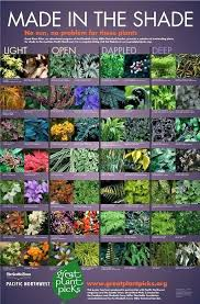 shaded plant outdoor making porch plants for summer shade border plants australia