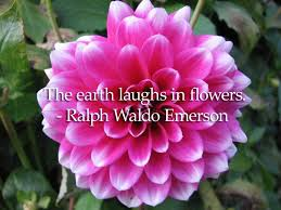 40 Of The Best Flower Quotes The Florist Guide Floristry Courses Custom Flower Quotes