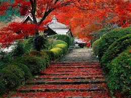 Japan, Nature, Autumn wallpaper