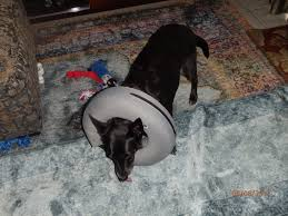 get your dog to sleep with a cone on
