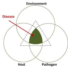 Pathogen Chart Plant Disease Pathogens And Cycles Cropwatch
