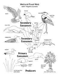 wetland_foodweb habitat mural on food web worksheet pdf