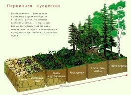 Динамика экосистемы Первичная сукцессия