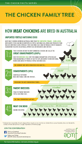 Lovebird Growth Chart Baby Chicken Growth Chart Www Bedowntowndaytona Com