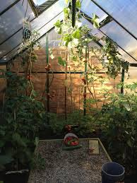 growing seedlings and propagation in a greenhouse