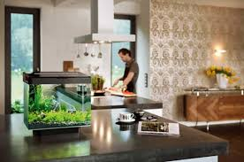 mini aquarium in the kitchen countertop
