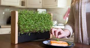 tiny indoor vertical garden grows micro veggies on its own in 10 days