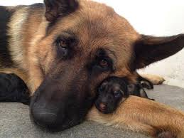 Image result for mother dogs