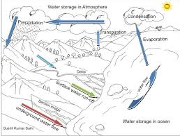 Small Picture The Diagram of Water Cycle Coloring Pages to Print Out for Kids